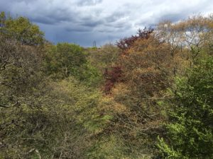 View from the treetop walk at Kew