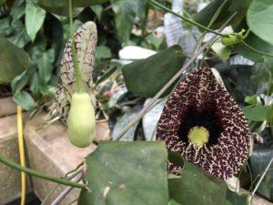 Exotics at Kew