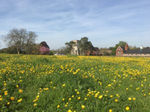 Meadow, Streatley