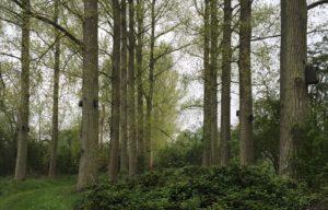 Housing estate for woodland birds