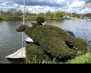 Any guesses as to what the topiarist had in mind when he started chopping?